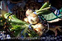Order# is: FarmMkt-5 - Next door it is produce time - you can see them here but you had to be there to smell these onions